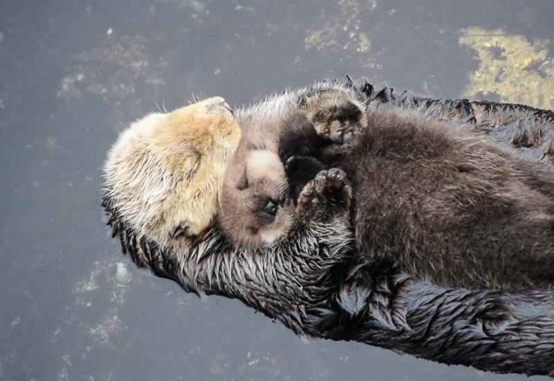 Estas imágenes de animales bebés con sus mamás te endulzaran el corazón