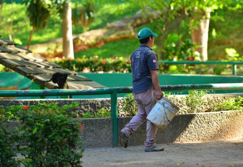 Animales  en peligro de extinción decomisadas son resguardadas en el Parque-Museo La Venta