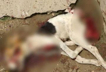 Hombre mata cruelmente a un perro en Cunduacán
