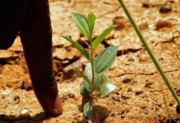 Ecosia, planta árboles mientras buscas en Internet