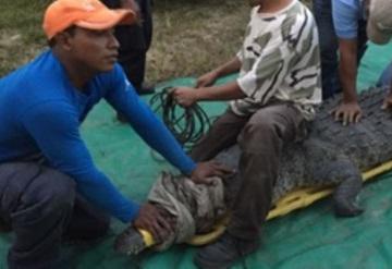 Capturan a cocodrilo que mató a pescador en Chiapas