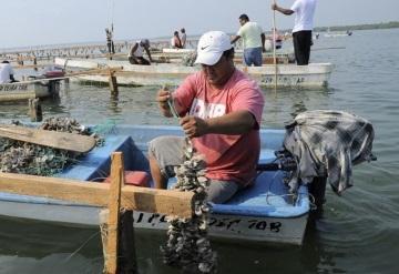 Sagarpa confirma caída de producción pesquera