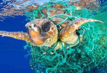 Español gana Wold Press Photo con la imagen, el impacto humano sobre el medio marino