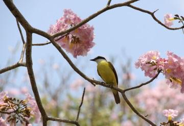 20 de marzo, el primer día de la primavera entró a las 04:29 am