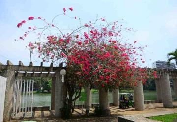Persistirá ambiente caluroso, seco y con posible llovizna en Tabasco