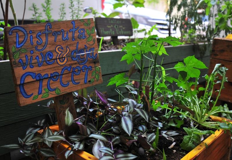 Conoce las ventajas y desventajas de los productos orgánicos