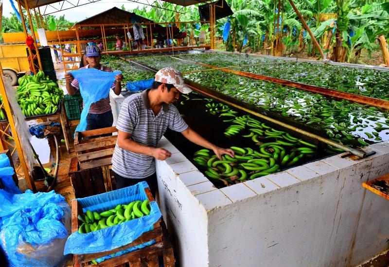 Tabasco exporta a 27 países del mundo