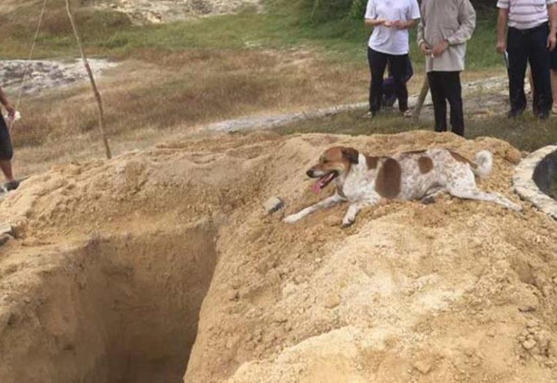 Perro fiel persigue cortejo fúnebre de su dueña hasta la tumba