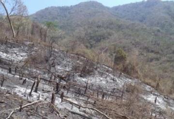 Hombre es multado con 100 mil pesos por incendio forestal