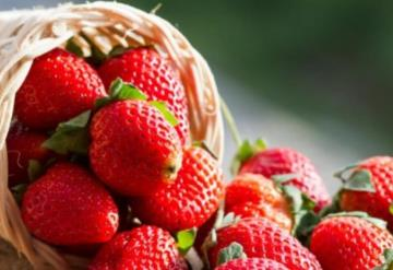 Extracto de fresa es capaz de inhibir la proliferación de células de cáncer de mama