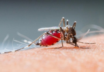 Dengue afecta a 30 de 32 estados del país
