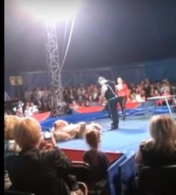 VIDEO: Oso ataca al público de un circo en Ucrania