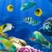 UNAM alista protección de peces
