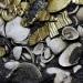 Encuentran oro en ofrenda de lobo sacrificado por los aztecas