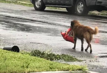 Perrito escapa de Harvey  con comida; gracias a las redes encontró a su familia