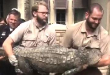 Un hombre  halla un cocodrilo en su comedor tras Harvey
