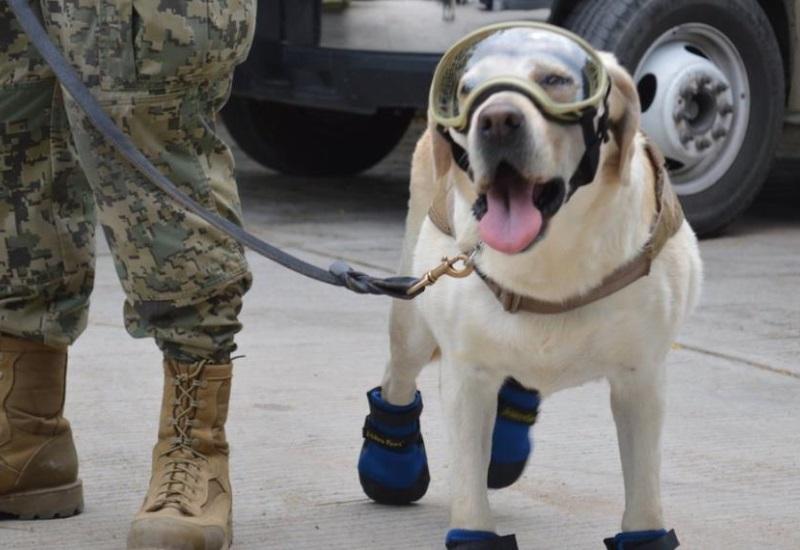 Crearán monumento en homenaje a canes rescatistas