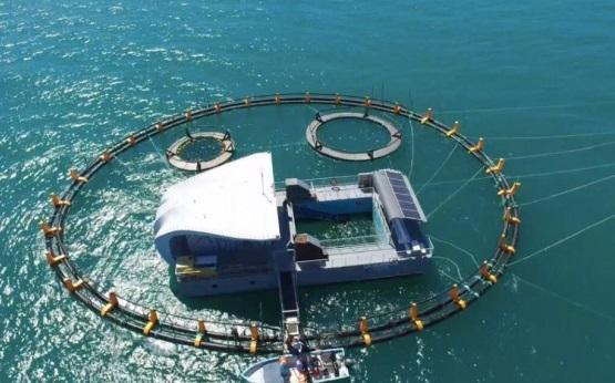 Semarnat supervisa santuario de la vaquita marina en BC