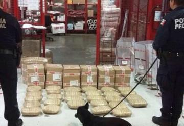 Agentes caninos detectan 34Kg de marihuana en Veracruz
