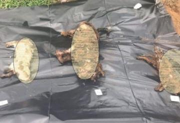 Investigan envenenamiento de 11 perros en Veracruz