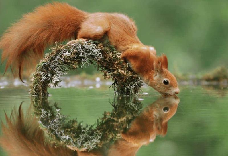 Cuando la naturaleza muestra su lado más tierno