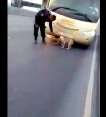 Rescatan policías a dos perros que se encontraban vagando en una carretera de Monterrey