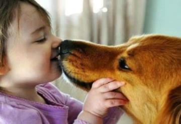 Besar mascotas podría dar cáncer: Según estudio