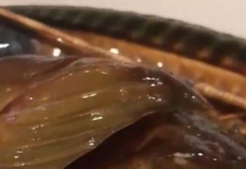 Restaurantero nota que un pez sigue vivo y lo libera en el océano