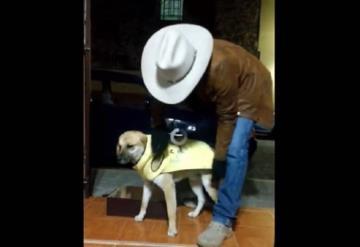 Comerciante abriga a perros callejeros que sufren las bajas temperaturas en Guadalajara