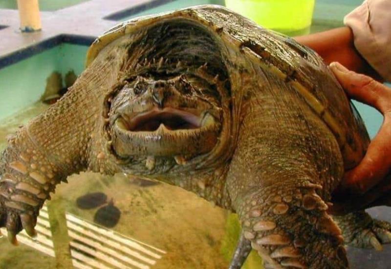 Fotogalería: Tortugas de Tabasco
