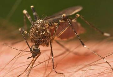 ¿Por qué pica el mosquito?