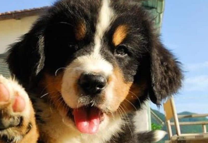 ¡Los cachorros más tiernos que hayas visto jamás!