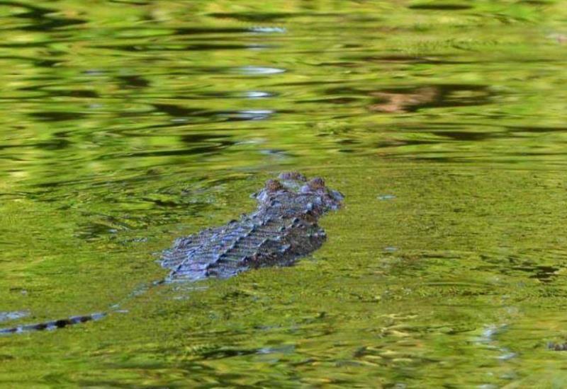 Especies disfrutan Laguna de las Ilusiones