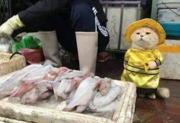 El gato que vende pescado en un mercado de Vietnam