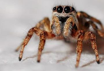 Pide comida a domicilio para que repartidor mate a una araña