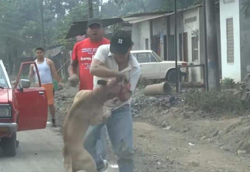 VIDEO: Perro pitbull ataca a un hombre