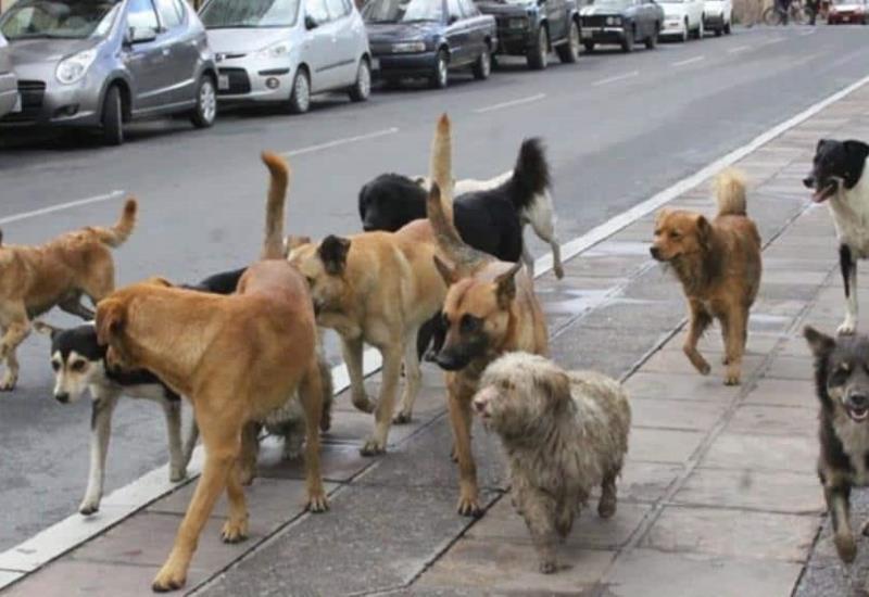 Colocan cámara de video a un perro callejero y descubren esto