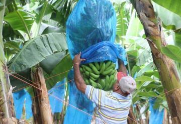 Ranchería Plátano y Cacao; tierra pródiga