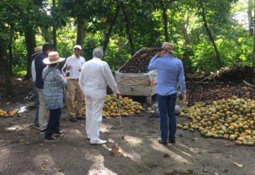 Contaminación de Pemex contribuye a baja producción de cacao: Productores