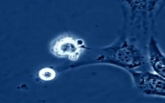 Científicos descubren la velocidad de la muerte