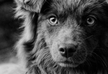 Video: Un perrito cuida el cuerpo de su amigo atropellado