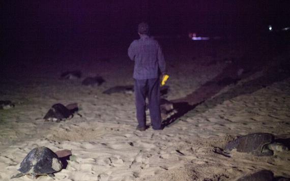 Se dispara la muerte de tortugas en la costa de Chiapas