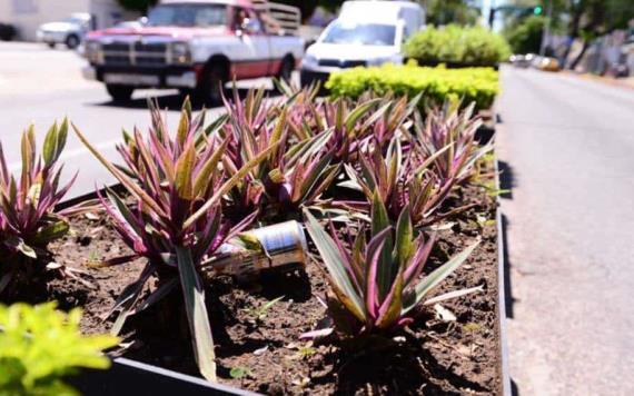 Jardineras de Paseo Tabasco sirven a los ciudadanos de basurero