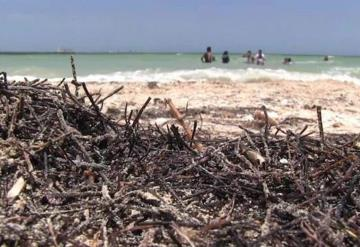 Sargazo llega a playas de Yucatán