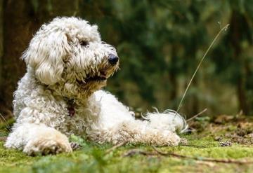 Un perro esperó durante 19 días en el lugar donde su ama murió en un accidente