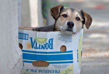 Abren comederos comunitarios para perros callejeros