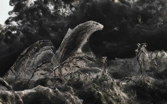 ¡Aterrador!: Lago amanece cubierto por telaraña gigante que se extiende a lo largo de un kilómetro
