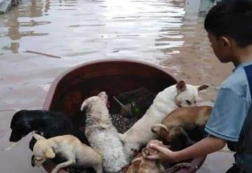 Niño salva a sus mascotas de la inundación en una tina