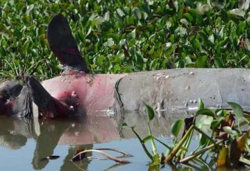 Piden justicia para manatíes muertos