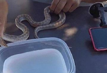 Critican a youtuber congela serpiente con nitrógeno líquido